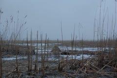 Fond avec l'hiver sec Reed sur le lac Images libres de droits