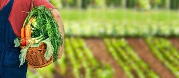 Fond avec la bio nourriture saine de légumes photographie stock libre de droits