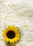 Fond avec la fleur photo stock
