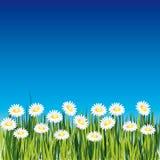Fond avec la fleur illustration de vecteur