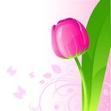Fond avec la tulipe Image stock