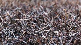 Fond avec la vue en gros plan des branches des buissons Image stock