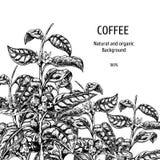 Fond avec le croquis de café Fond de vecteur de cru Feuilles tirées par la main de vecteur Conception de disposition pour l'empaq illustration de vecteur