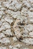 Fond avec le sable et le sel de plage image stock