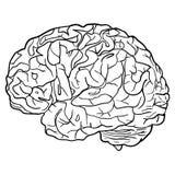 Fond avec le vecteur de concept de cerveau Photos stock