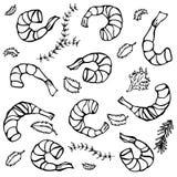 Fond avec les crevettes et les herbes cuites Illustration réaliste de crevette rose de fruits de mer de vecteur Photos stock