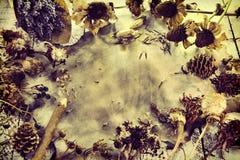 Fond avec les fleurs de lavande, le vieux parchemin de papier, le crayon, les herbes sèches, les graines et les plantes, vue supé images stock