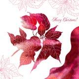 Fond avec les fleurs rouges de poinsettia Photo libre de droits