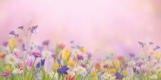 Fond avec les fleurs sauvages Photo libre de droits