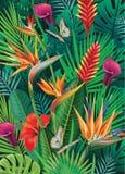 Fond avec les fleurs tropicales exotiques Images libres de droits