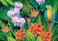 Fond avec les fleurs tropicales exotiques Photographie stock libre de droits