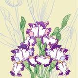 Fond avec les iris bleus blancs Images stock