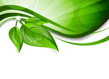 Fond avec les lames vertes illustration stock