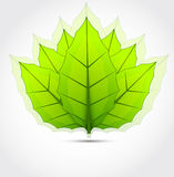 Fond avec les lames vertes Photos stock