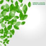 Fond avec les lames vertes fraîches Photographie stock