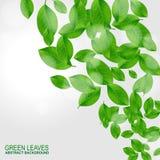 Fond avec les lames vertes fraîches Photographie stock libre de droits