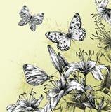 Fond avec les lis de floraison et le beau bout Images stock