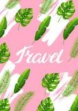 Fond avec les palmettes tropicales Plantes tropicales exotiques Illustration de nature de jungle Photographie stock libre de droits