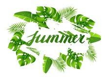 Fond avec les palmettes tropicales Plantes tropicales exotiques Illustration de nature de jungle Images stock
