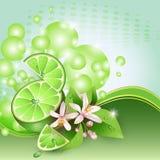 Fond avec les parts juteuses du fruit de limette illustration de vecteur