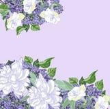 Fond avec les pivoines et le lilas blancs Photographie stock libre de droits