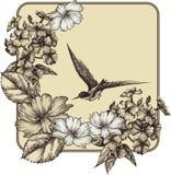 Fond avec les roses de floraison, le phlox et un vol illustration stock