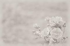 Fond avec les roses légères Photos stock