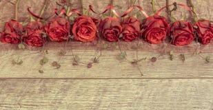 Fond avec les roses rouges Photographie stock