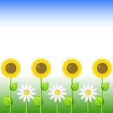 Fond avec les tournesols et la marguerite Photo stock