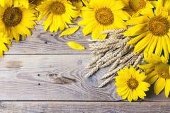 Fond avec les tournesols et les oreilles jaunes de blé sur un vieil en bois Images libres de droits