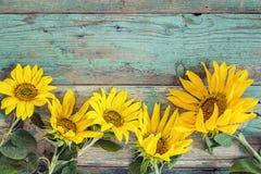 Fond avec les tournesols jaunes sur de vieux conseils en bois avec la peau Photo stock