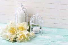 Fond avec les tulipes, le narcisse et les bougies blancs Image stock