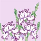 Fond avec trois iris Photos libres de droits