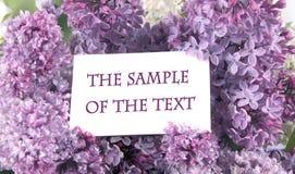 Fond avec un lilas Photographie stock libre de droits