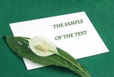 Fond avec une fleur blanche Images stock