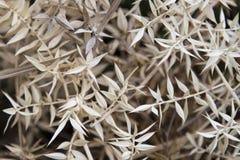 Fond avec une herbe sèche sauvage Photographie stock