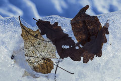 Fond : banquise avec les feuilles retenues par les glaces Photos libres de droits