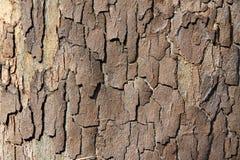 Fond Barky de texture Photo libre de droits