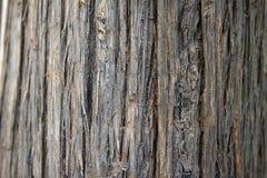 Fond Barky de texture Photos libres de droits
