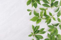 Fond bien aéré frais d'été - le jeune vert part sur la planche en bois blanche, vue supérieure, l'espace de copie photo libre de droits