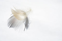 Fond blanc avec l'effet pelucheux de plume et d'ombre Photographie stock