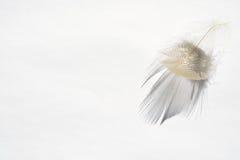 Fond blanc avec l'effet pelucheux de plume et d'ombre Photographie stock libre de droits