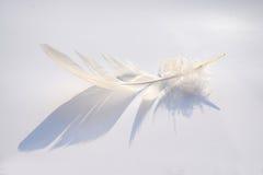 Fond blanc avec l'effet pelucheux de plume et d'ombre Image stock