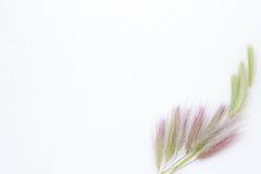 Fond blanc avec l'endroit vide pour l'inscription sur un blanc SH Images stock