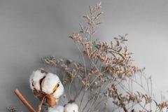 Fond blanc avec la branche de l'usine de coton Image libre de droits