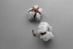 Fond blanc avec la branche de l'usine de coton Image stock