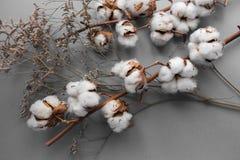 Fond blanc avec la branche de l'usine de coton Photos libres de droits