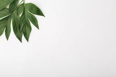 Fond blanc avec les feuilles vertes, composition plate Images libres de droits