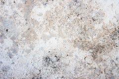 Fond blanc concret Image stock