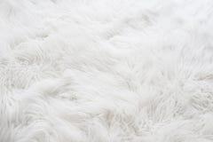 Fond blanc de fourrure Photographie stock libre de droits